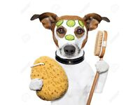 Dog Groomer / Stylist for high end dog spa and pet boutique required