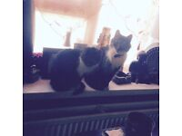 keef, 12 years old short haired grey and white tabby has gone missing from Lime street Southampton.