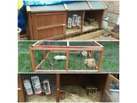Guinea pigs- complete set up