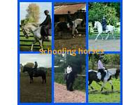 Qualified stable hand/groom