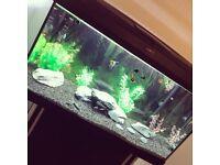 115l Fish Tank (complete setup)