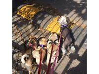 Premier dog walking by Dogs A Go Go