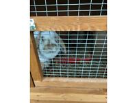Brand new large hutch with rabbits