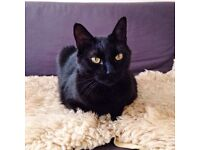 Missing Black Cat - NEED MORE INFORMATION PLEASE HELP