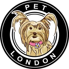 Fun Business Internship Pet Accessories London