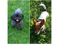 Dog walking & Boarding in Chiswick, Fulham, Chelsea, Hammersmith, Earl's Court, Kensington
