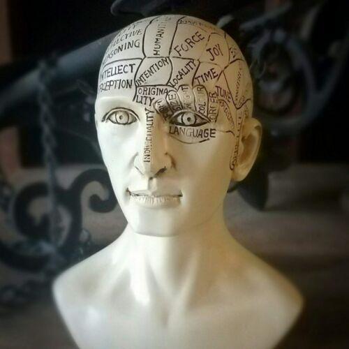 Phrenology Bust, Vintage Medical Phrenology Head, Oddities, Curiosities, Unique
