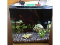 AquaOne Fish Tank