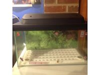fish tank with cover and filter matt