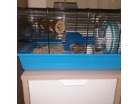 Hamster with Cage and Accessories - free to good home