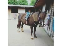 Pony part loan