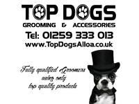 Professional Dog grooming salon