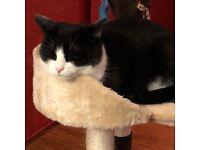 Lost Cat Almondsbury Suki please help