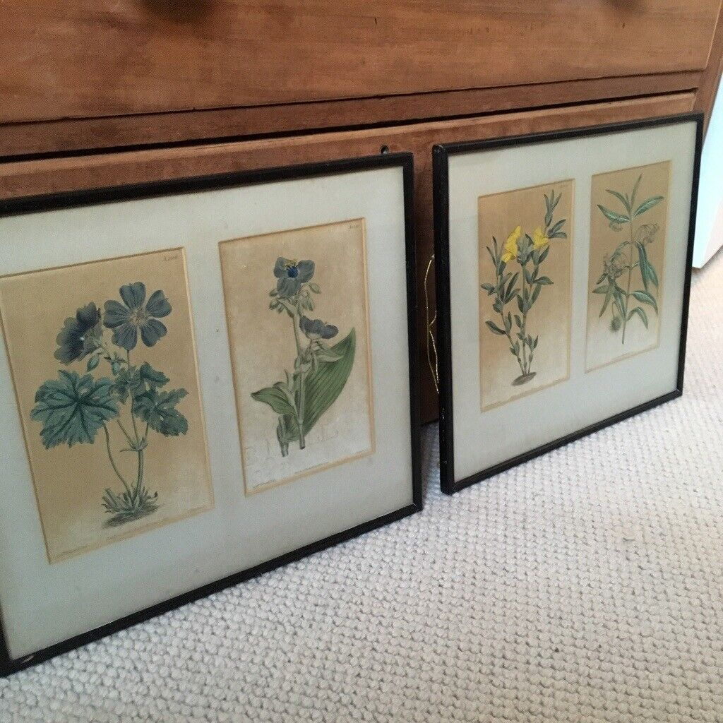 Vintage antique framed floral botanical prints set of two