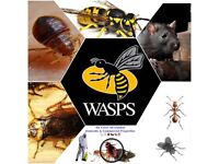 Pest Control Mice Rat bedbugs wasps flies mouse extermination
