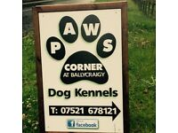 Dog kennels Newtownabbey