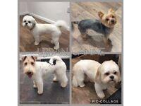 Dog Grooming at Urban Canine Scotstoun