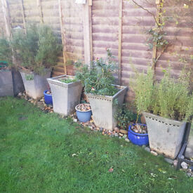 Tall metal silver coloured garden pots, 3 Blue glazed pots, soil if wanted, poly tunnel vegetables