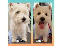 Dog Grooming - East End Glasgow