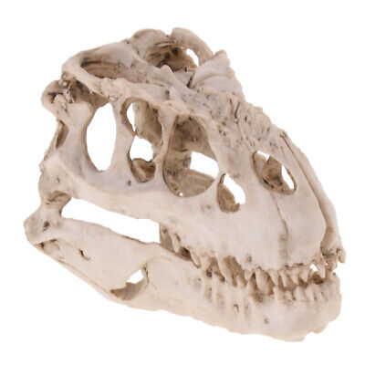 Reptile Hide Resin Dinosaur Skull Lizard Hideout Cave for Home Decoration