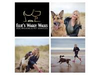 Ellie's Waggy Walks - Dog Walking and Pet Services