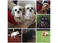 Dog Loving Volunteers Wanted