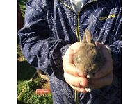 Rabbits collection only from torquay