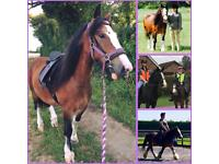 Share horse available
