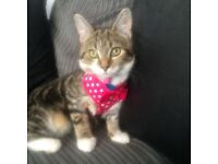 Two beautiful female kittens for rehome
