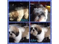 L Jay's Dog Grooming and Boarding