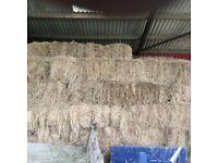 hay bales, 100 meadow hay 2016, has been fed to horses