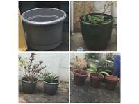 Plant pots, garden pots, flower pots. Various sizes & colours.