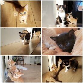 4 stunning kittens for sale