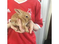 15 x baby rabbits for sale male and females ready now £20 each