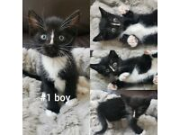 9 Kittens for sale - ALL are unique and cute!