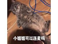 Sale Cat