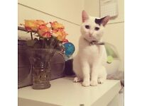 15 Month Old Kitten for Rehoming