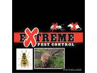 Extreme pest control Leicester - wasps -Rats - mice - bed bugs - fleas . Vermin .