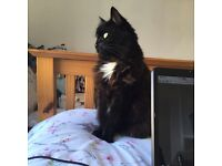 7 year old female cat