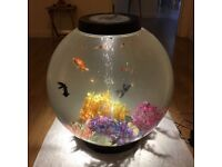 Beautiful freshwater tank complete with fish, led lights, gravel, plants and pump