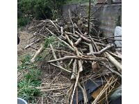 Wood trees branches logs free to collect home