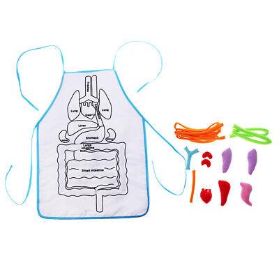 Kids Anatomy Apron Human Body Organs Awareness Educational Insights Toys - Organs Human Body