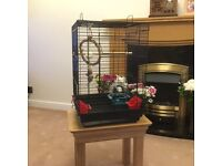 Black budgie/small parrot cage