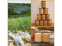 100 % real organic raw honey crystallized set honey