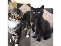 2 x Boy Kittens