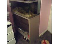 Urgent sale Fish tank!!