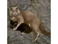 ***LOST CAT***