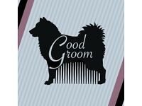 Professional, Friendly, Home-Based Dog Grooming Service in Trecynon, Aberdare