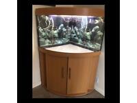 Juwel 190l corner fish tank