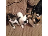 Lovely kittens for sale